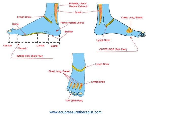 Lymphs In Foot Lymphatic Drain The Lymphatic System