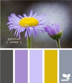 Yellow Purple And Grey Palette Design Seeds Purple Girls Room Color Schemes