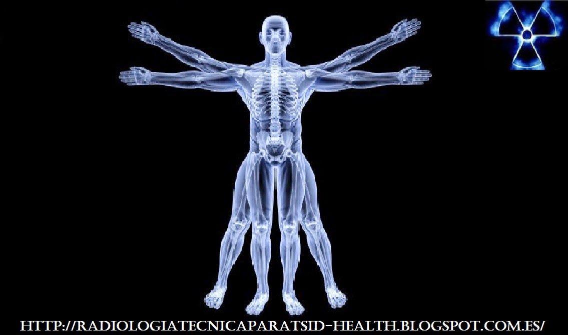 Radiología e Imagen para el Diagnóstico : ANATOMÍA RADIOLOGICA ...