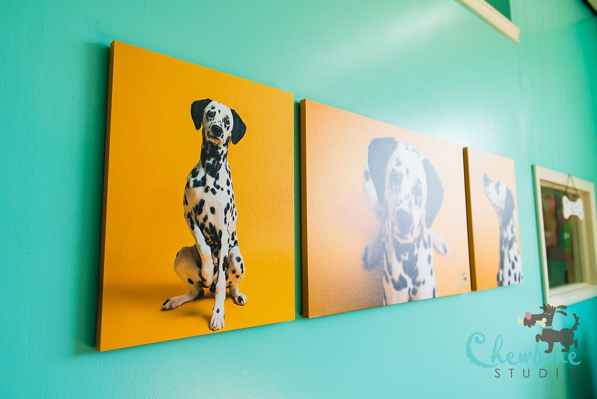 Canvas Display At The Spotted Dog Pet Salon In Avon Ohio