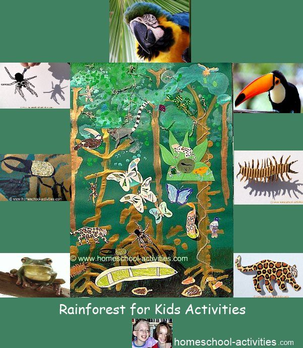 Marvelous Rainforest Craft Ideas For Kids Part - 8: Fun Rainforest Kids Crafts And Ideas. Make A Bromeliad From A Pineapple,  Set Up