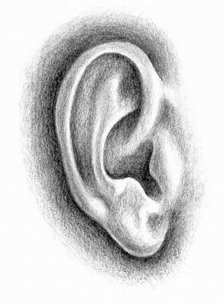 how to draw to human ears