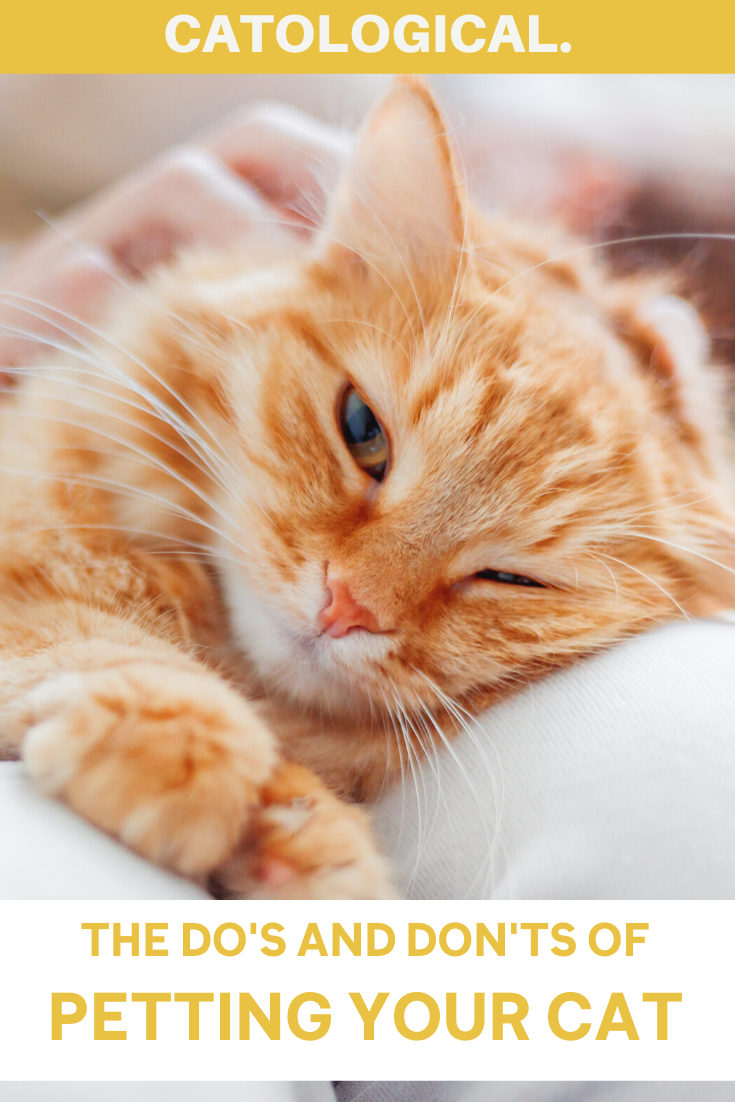How To Pet Your Cat Properly In 2020 Cats Kitten Care Cat Facts