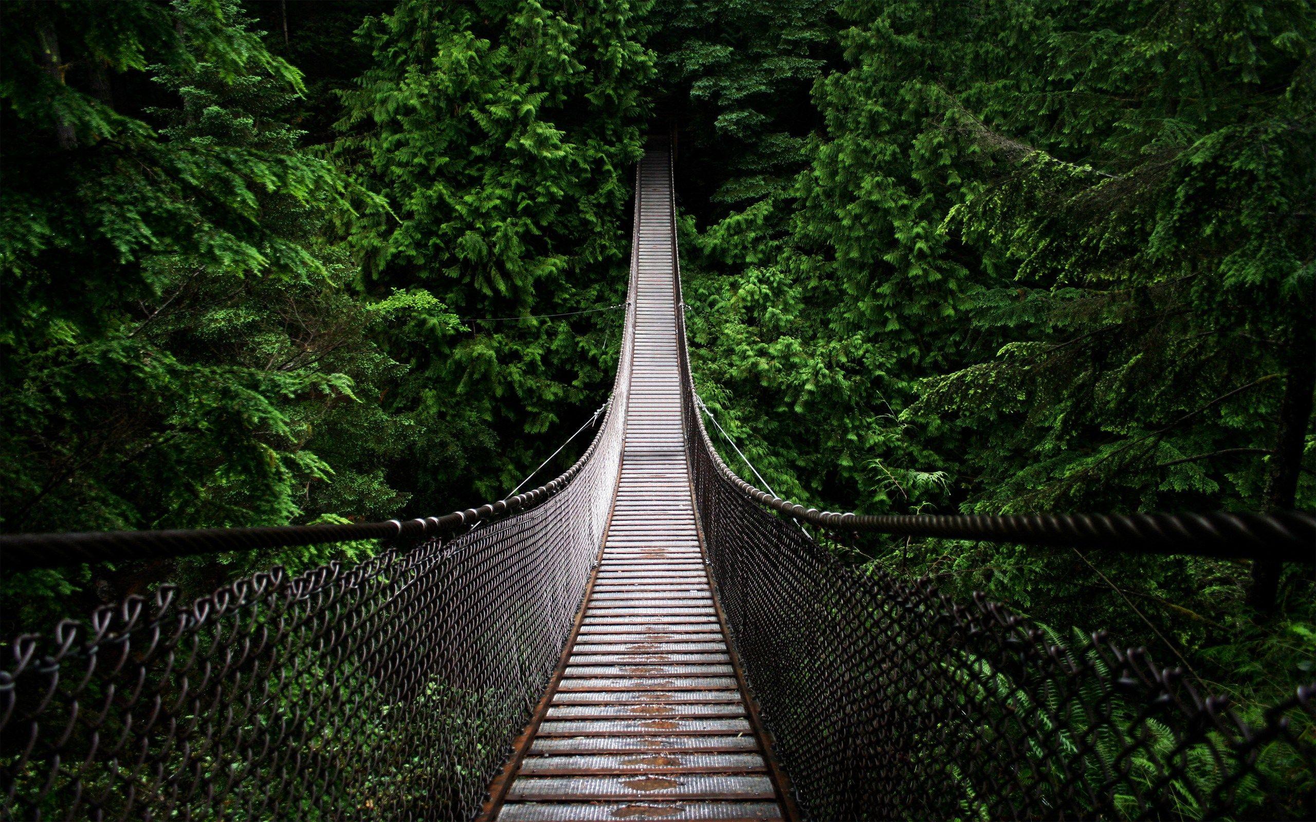 hd pine tree wallpaper Лесные обои, Фотографии, Мост