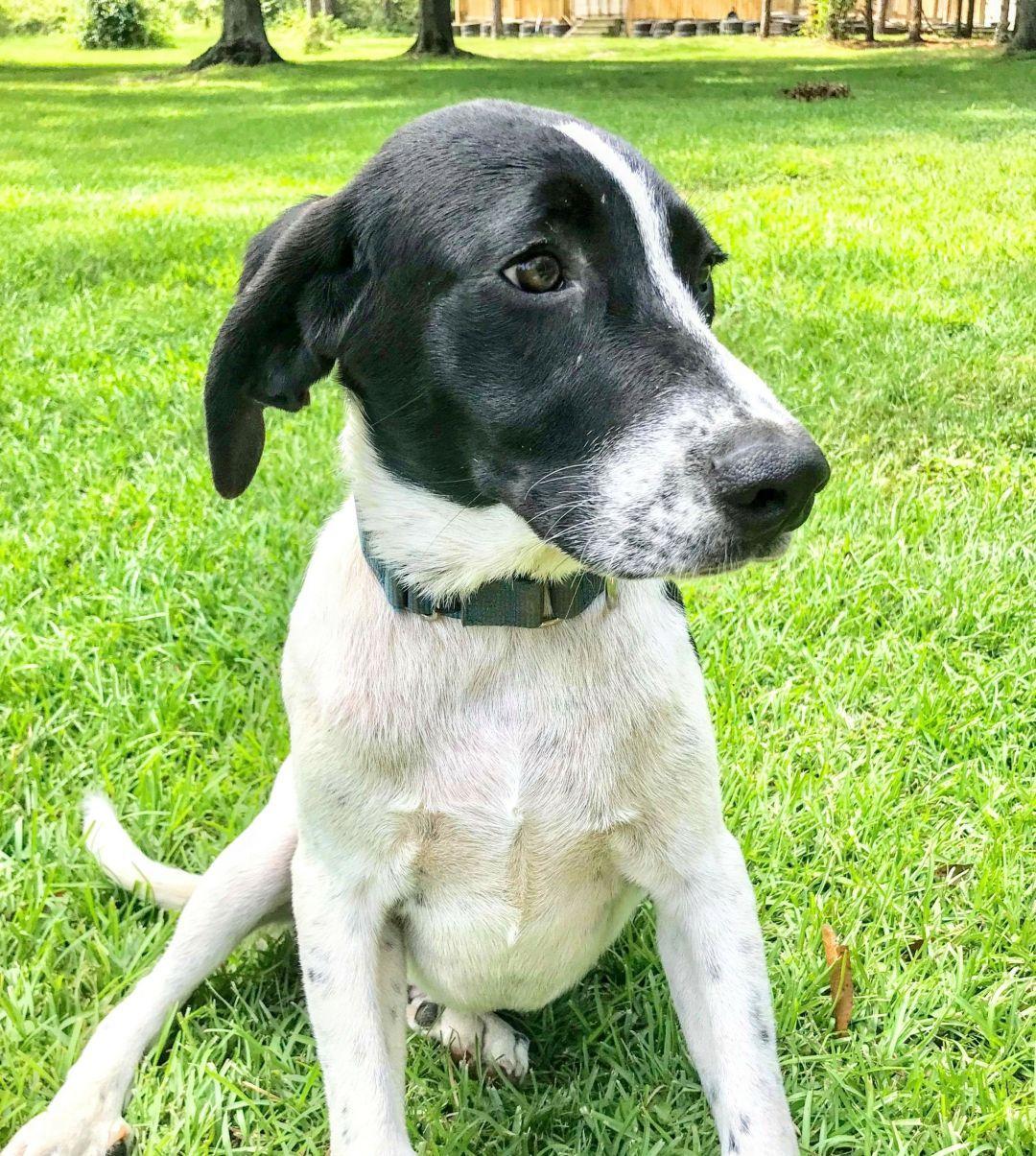 Adopt Kody on Petfinder Lucky puppy, Dog adoption, Black