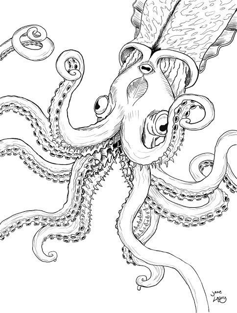 Jake Lagory Illustrator Cryptozoology Coloring Book Kraken Kraken Coloring Books Cryptozoology