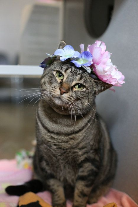 The 49 Most Important Things To Happen At Calgary Humane In 2014 Cute Cats Dogs Pretty Cats Cat Safe Plants