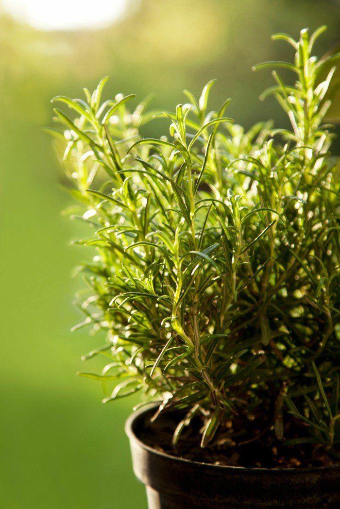 12 zimmerpflanzen f r positive energie zu hause herbs for Pflanzen zu hause