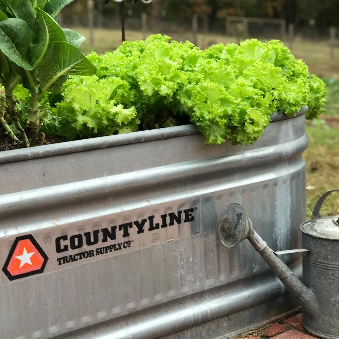 Keep Your Gardens Growing With Fall Container Gardens Lettuce Kale Mums So Many Great Opt Fall Container Gardens Fall Garden Vegetables Container Gardening