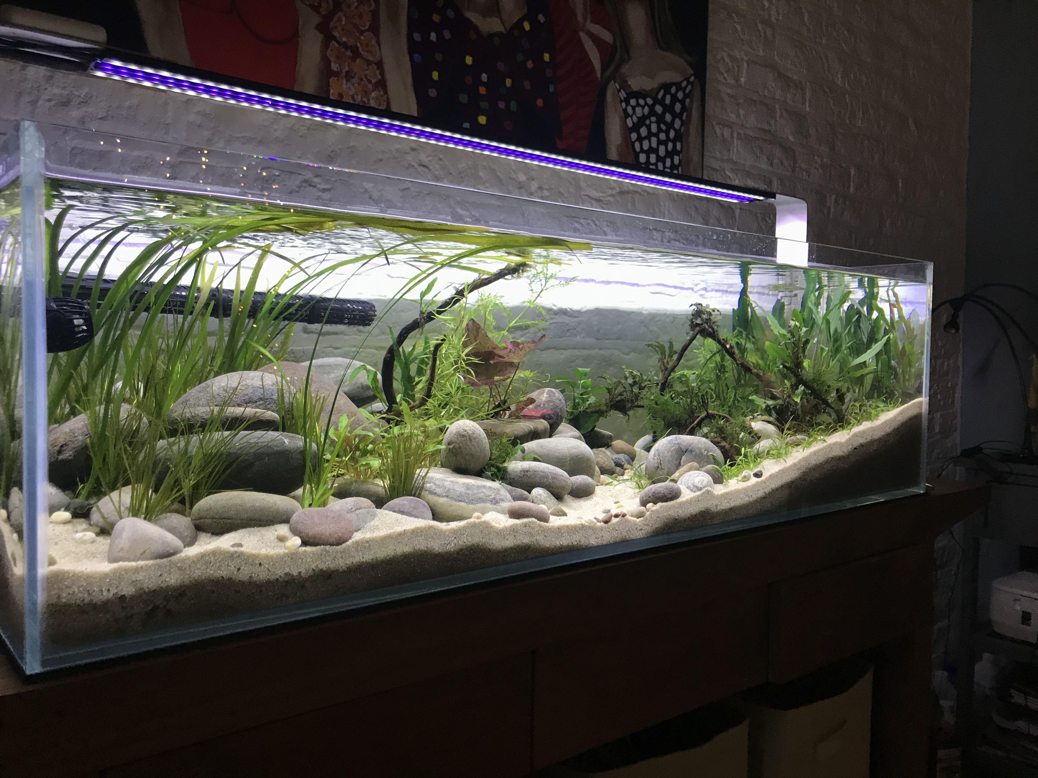 Fish Aquariums, Borneo, Tropical Fish Aquarium, Treatment Rooms, Aquarium  Ideas, Freshwater Aquarium, Aquascaping, Fish Tanks, Terrariums