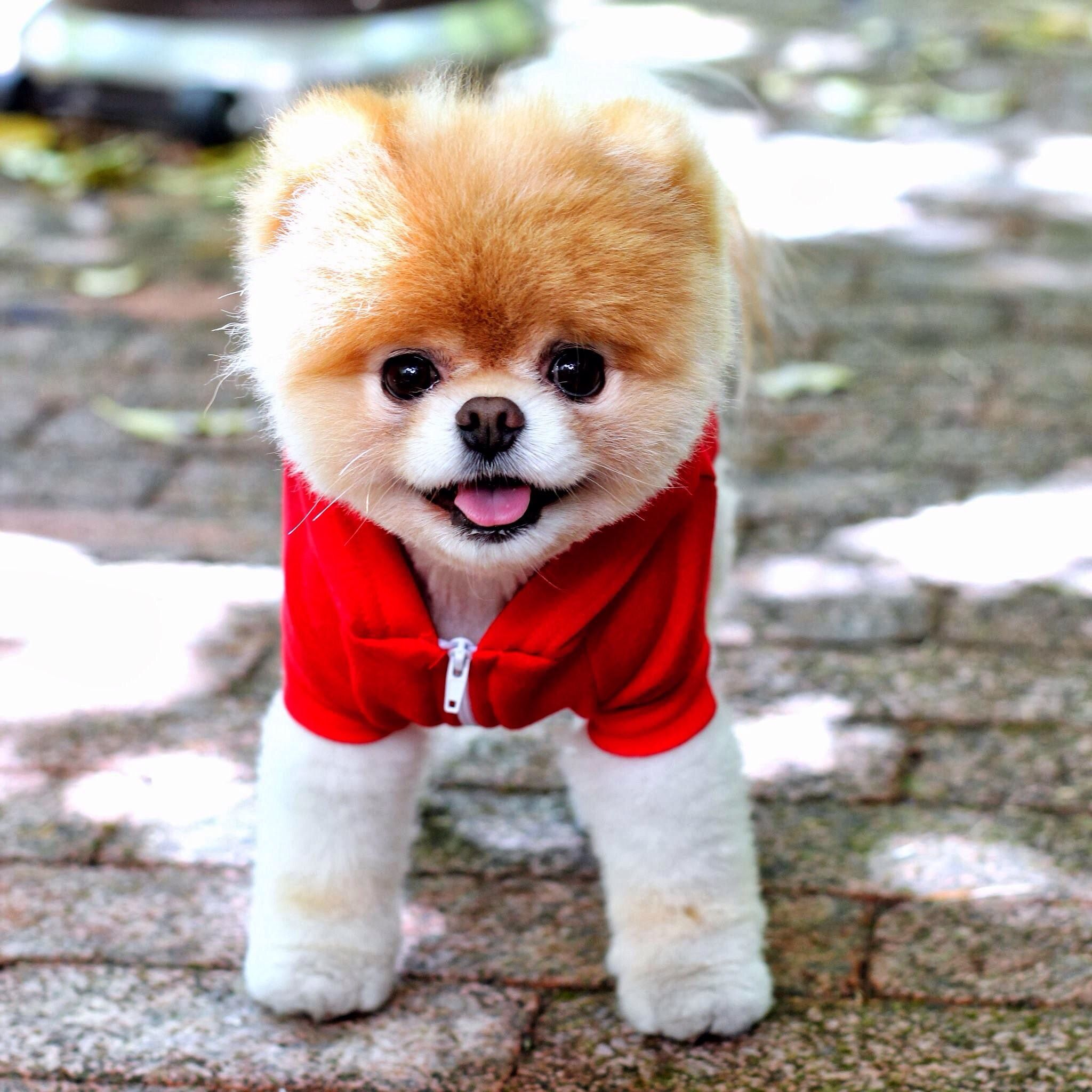 Top Boo Chubby Adorable Dog - 8ec42c17ef17c56d3efdd8ecbf40724b  Graphic_903492  .jpg