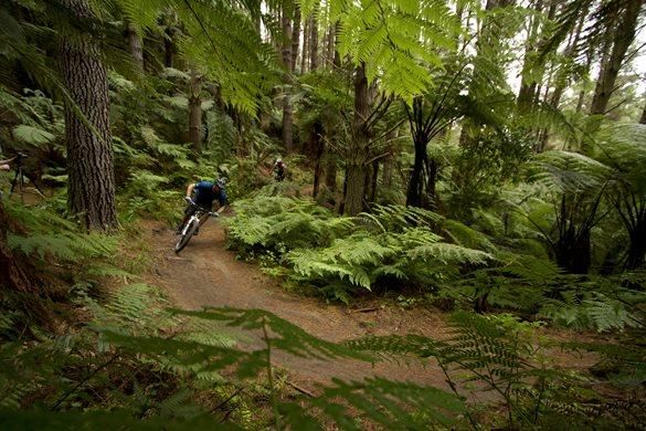 Redwood Forest Mountain Bike Trails Google Search Mountain