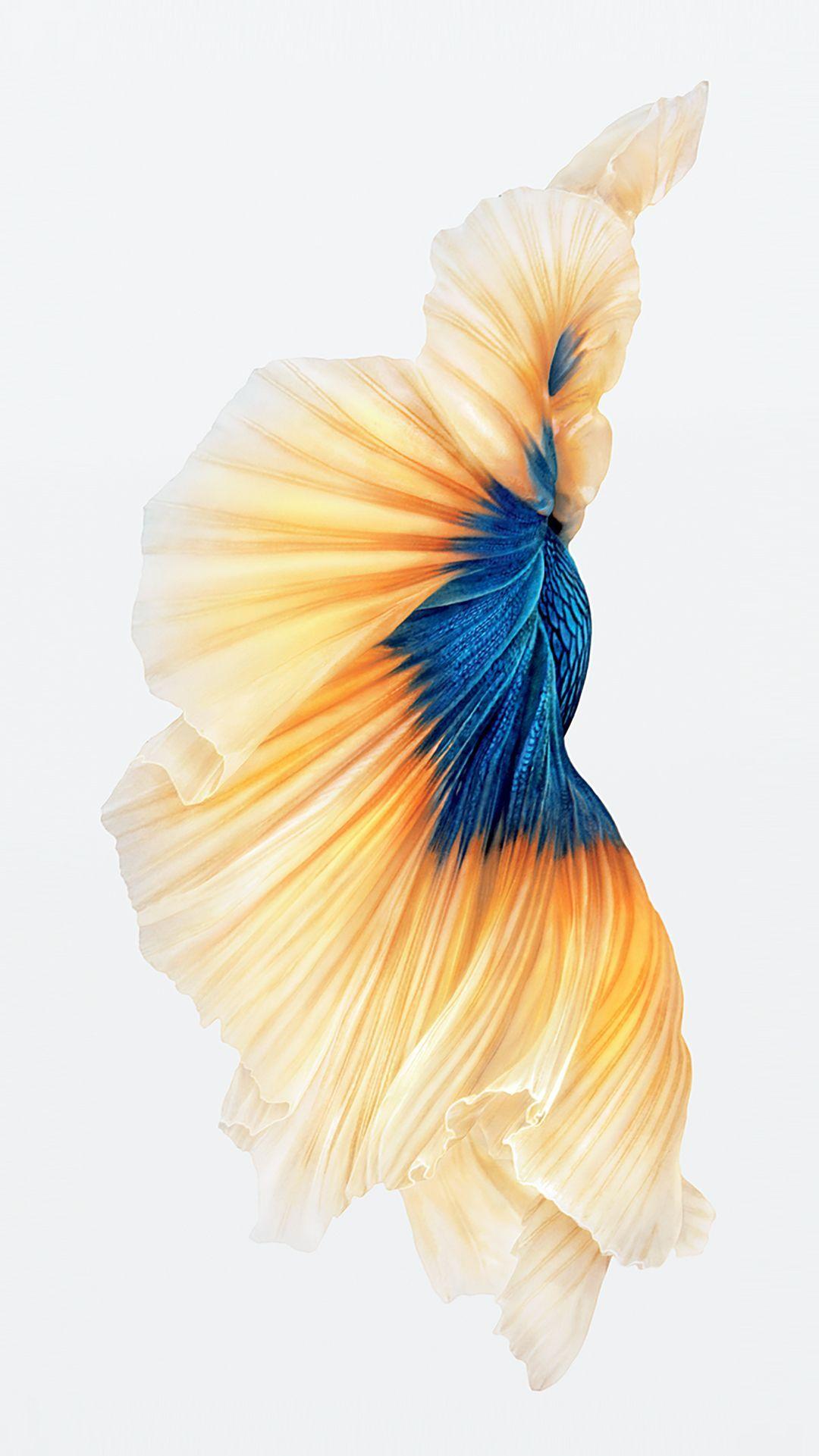 Iphone 6s Fish Gold Wallpaper Ios9 Fond D Ecran Telephone Fond D Or Fond D Ecran Iphone