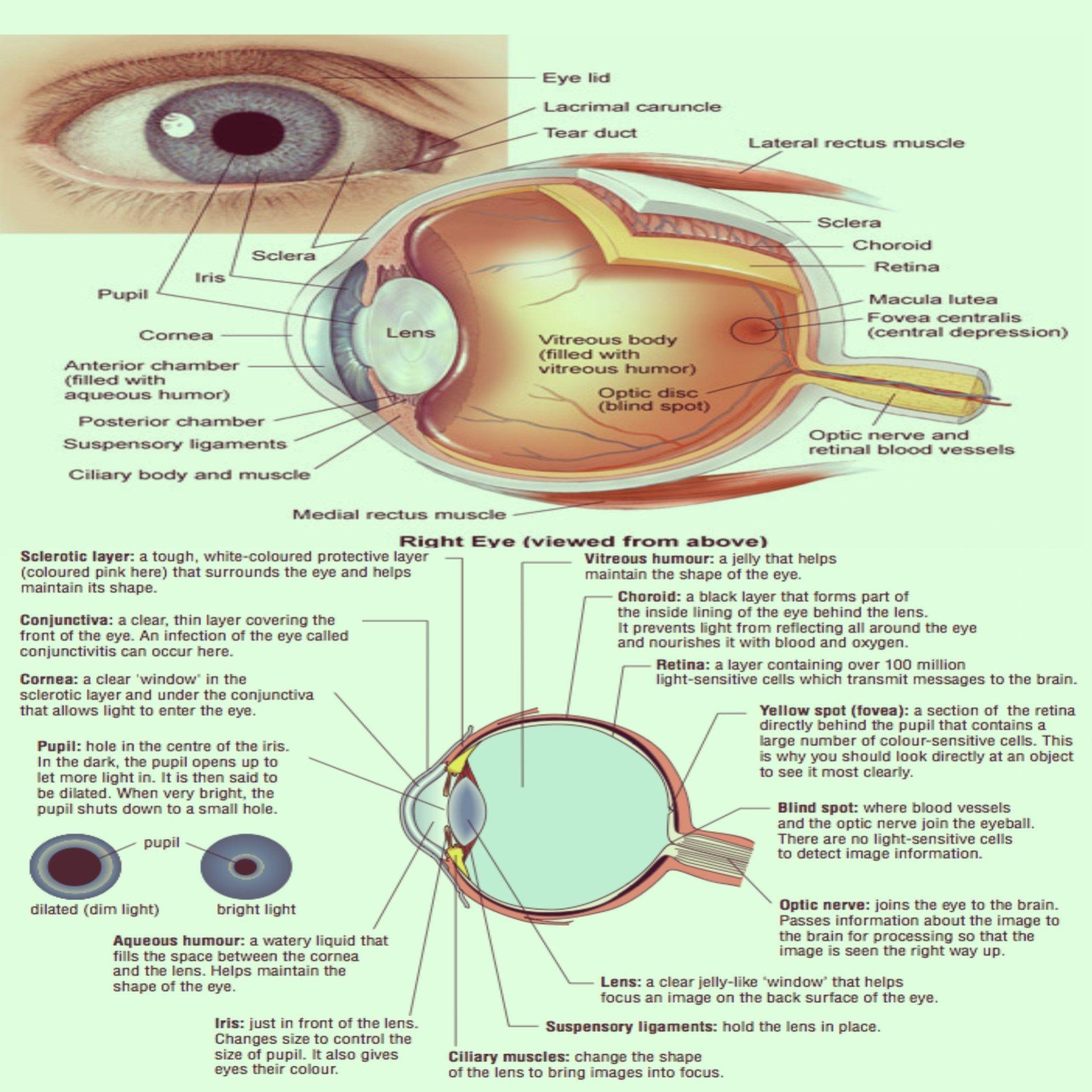 Eye Diagram  U0026 It U0026 39 S Finctions