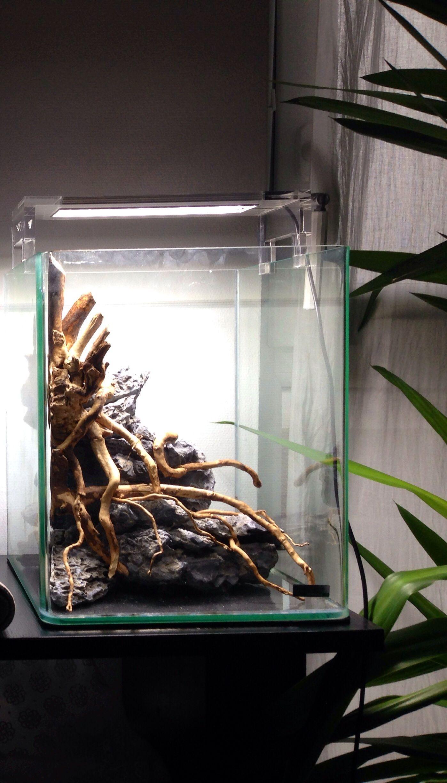 Nano cube 20l en projet nano cube aquarium aquarium deko und aquarium einrichten - Nano aquarium deko ...