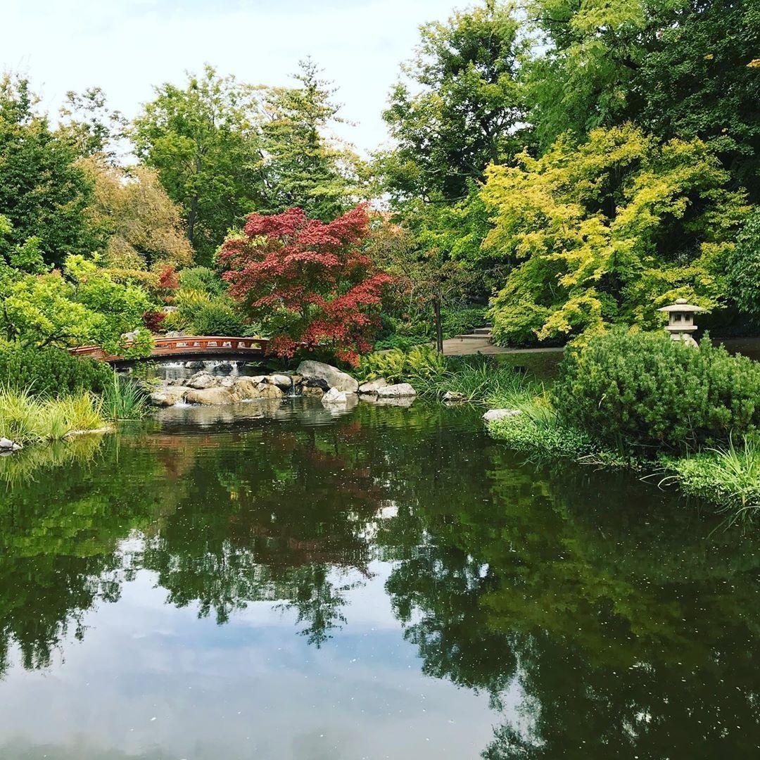 Setagayapark In Vienna Wien Vienna Japanischergarten Japanischer Garten Garten Japan