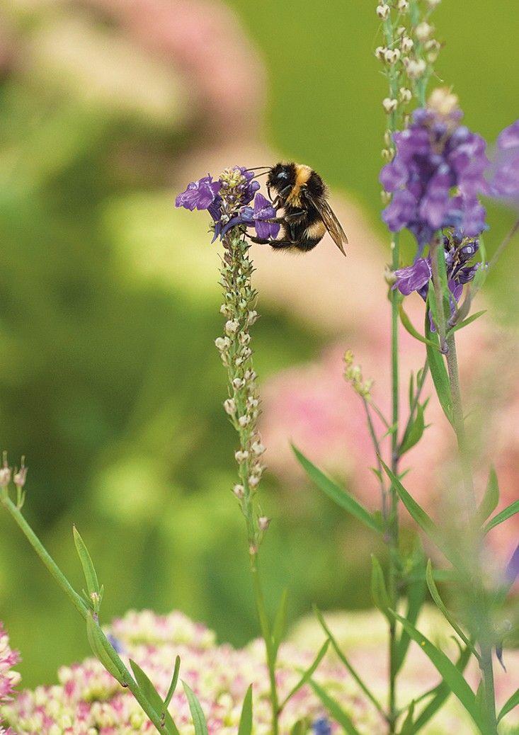 The Wildlife Gardener book. Gardenista