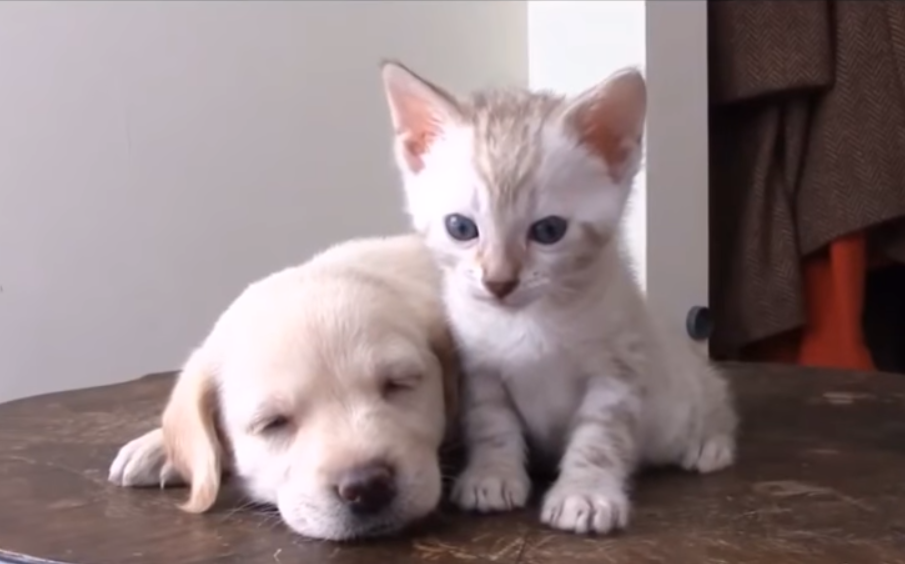 Когда кошки и собаки - лучшие друзья | Кошки, Собаки