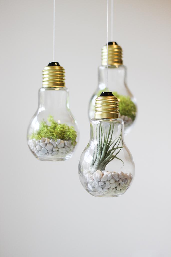 Best 25 Light Bulb Terrarium Ideas On Pinterest Light Bulbs Plus Diy Valentine 39 S Light Bulb