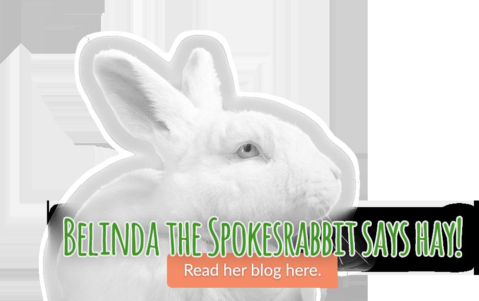 Belinda The Spokesrabbit Says Hay Read Her Blog Here Small