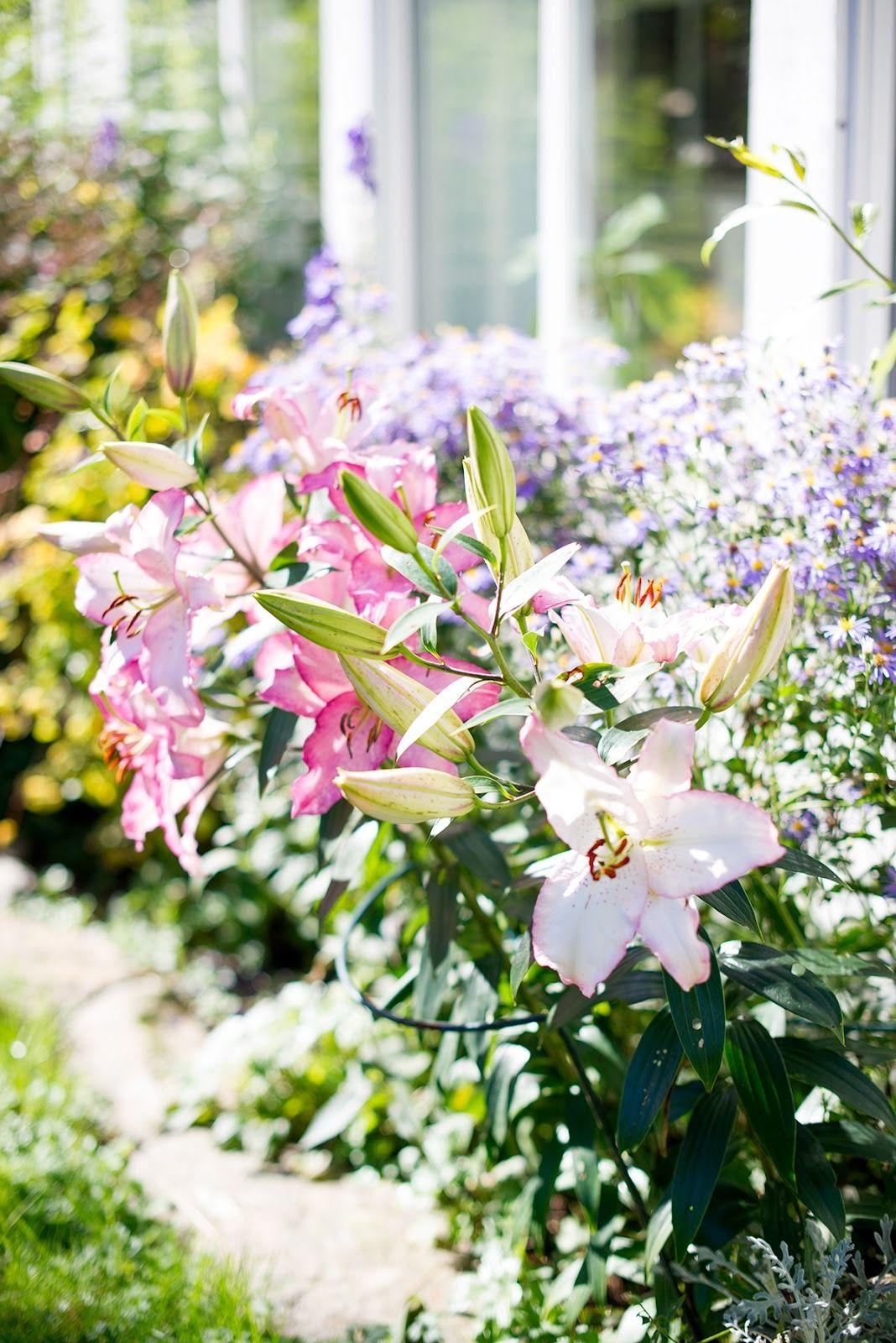 Summer Cottage image by Debbie Halkett Beautiful gardens