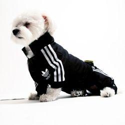 Morrocotudo mini buzo Adidas para perro.