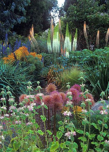 Good use of Eremurus/Foxtail lilies here shown off against a dark background.  The Eremurus are the tall spikes in white and soft terracotta in the background of the picture by Linda Cochran  Garden, Bainbridge Island by terrymoyemont, Image Via: Flickr