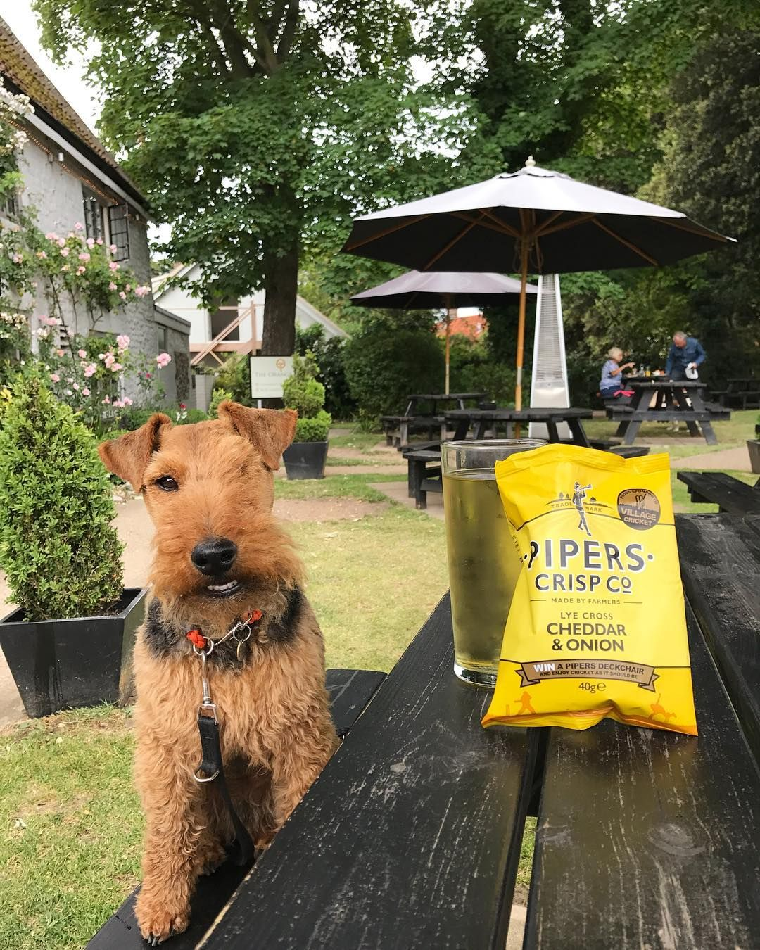 Treat Your Pet To A Holiday In The East Of England And Try Out Some Of These Fantastic Dog Friendly Days O Dog Friendly Holidays Dog Friends Your Pet