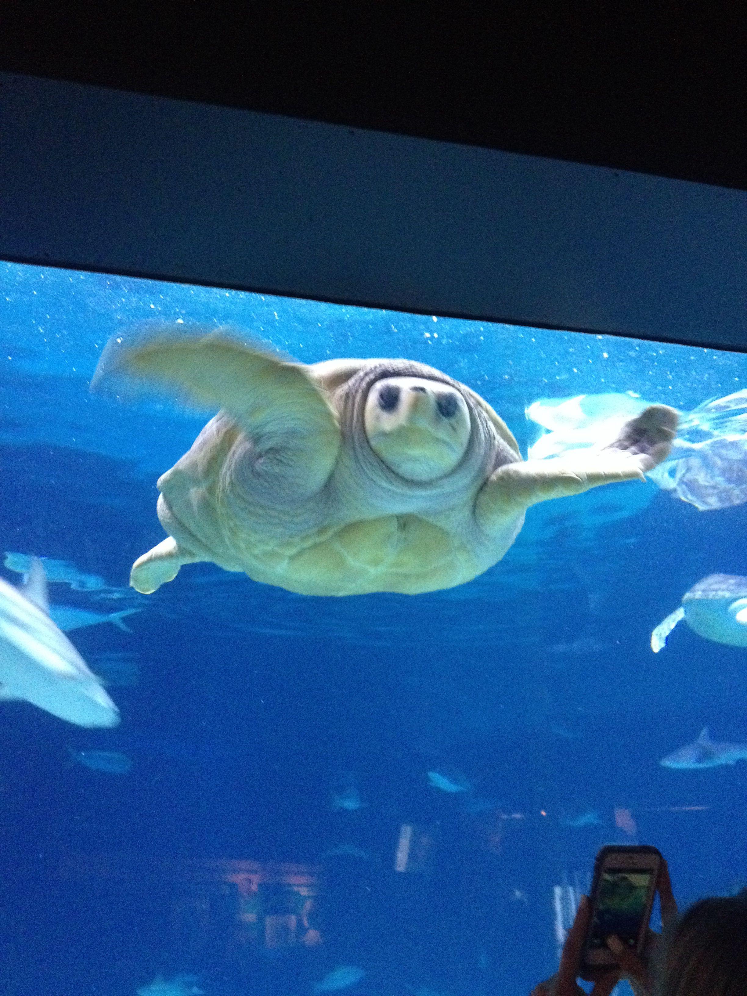 Pin on Amazing Aquariums