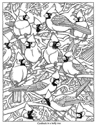 Pin On Coloring Pages To Print Birds