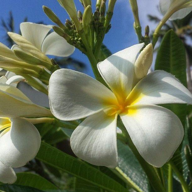 Four Seasons Wailea