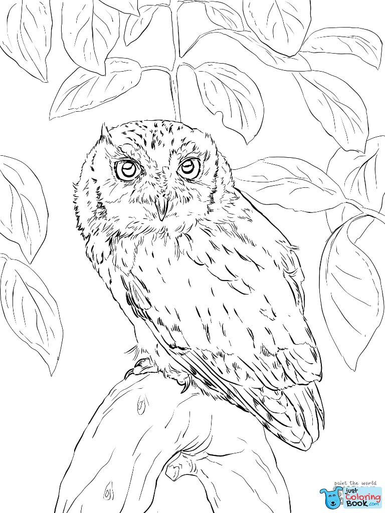 Owls Coloring Pages Free Coloring Pages With Regard To Boreal Owl Coloring Pages Free Download Owl Coloring Pages Bird Coloring Pages Owls Drawing