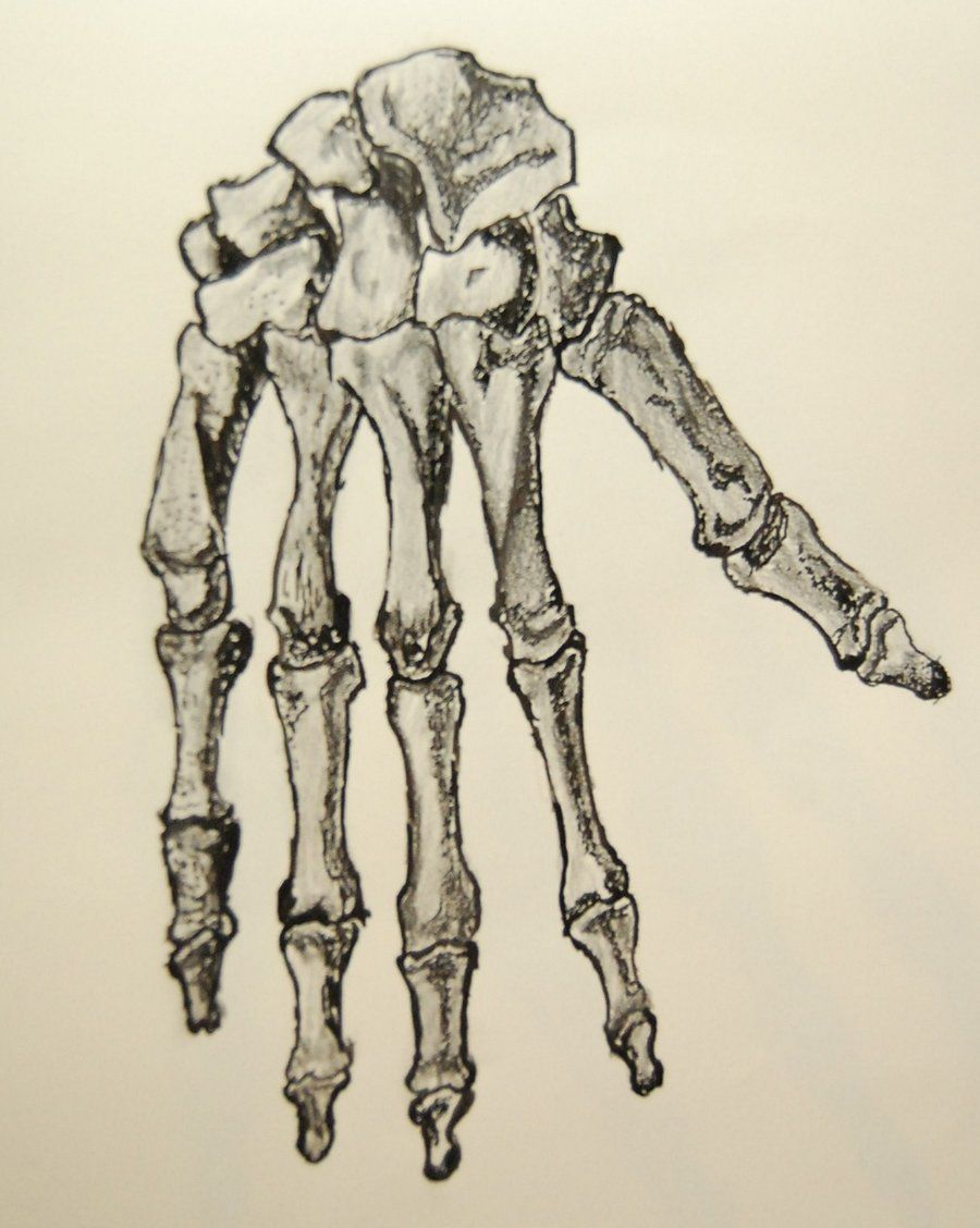 skeleton hand Google Search Bone drawing, Skeleton