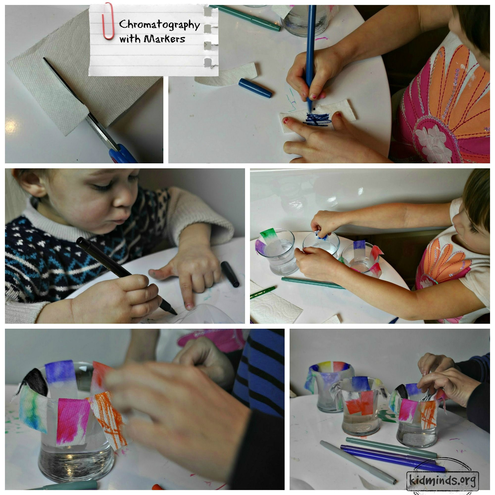 Chromatography Experiments with Kids - 5 ways | Markers