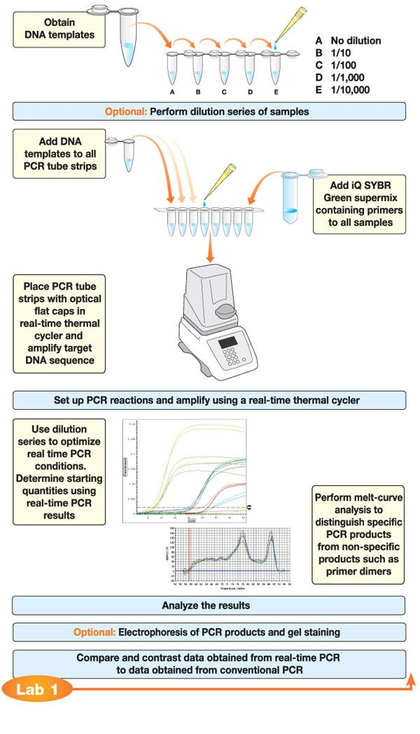 Flow Chart For Real Time Pcr Or Quantitative Pcr