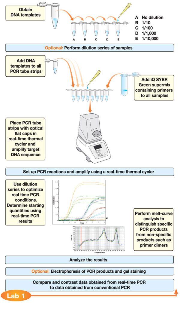 Ap bio molecular genetics essay