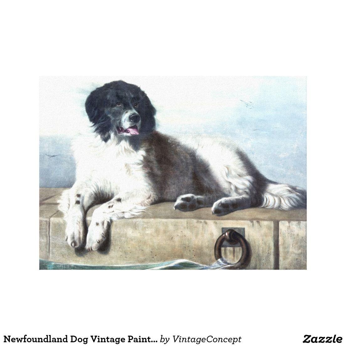 Newfoundland Dog Vintage Painting Canvas Print Zazzle