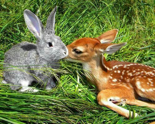 Bambi y Tambor!!!! #Disney