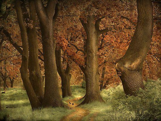 The Wonder Woods by Lars van de Goor