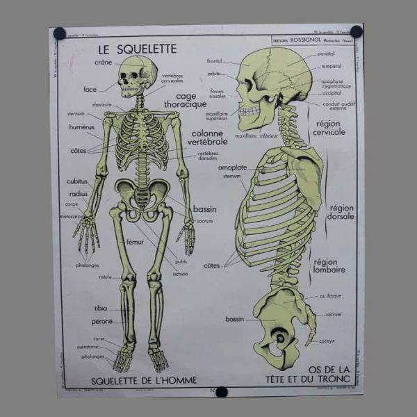 Cartel de escuela vintage de anatomía humana. Francia 1950 - 1955 ...