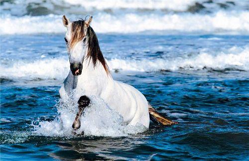 White Horse Running In Water Hd Desktop Wallpaper High Definition