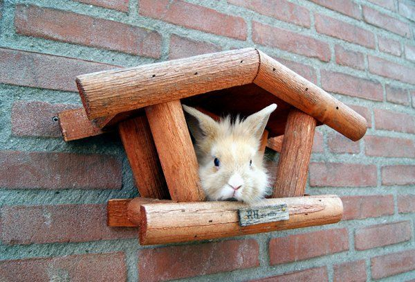 leela is a….bird? - 50 Cute Bunny Pictures  <3 <3