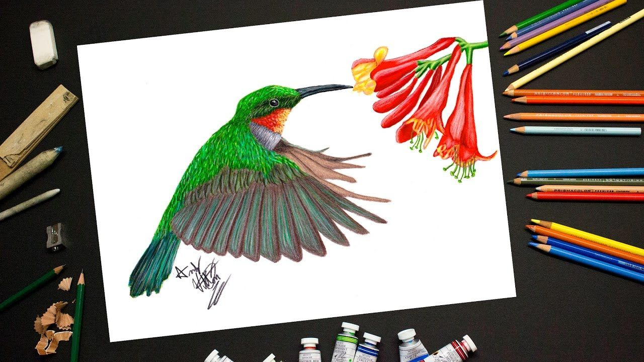 Drawing a Hummingbird - realistic time lapse drawing