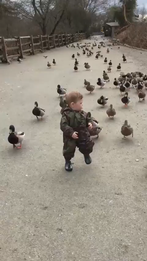Latest Funny Kids The duck apocalypse has started. 10