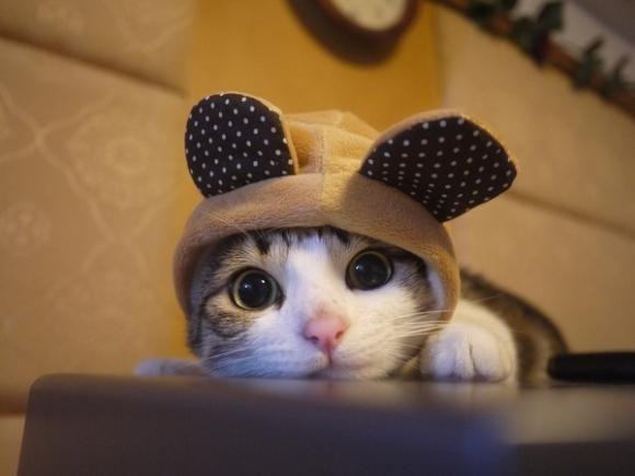 Cutest cat ever! via @EmrgencyKittens