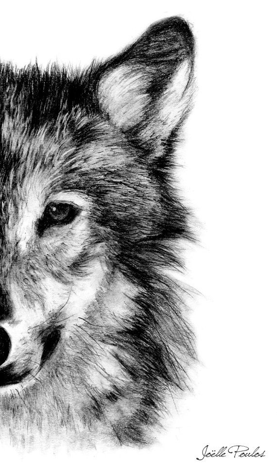 Wolf fine art illustration drawing realistic by joellesemporium £12 00