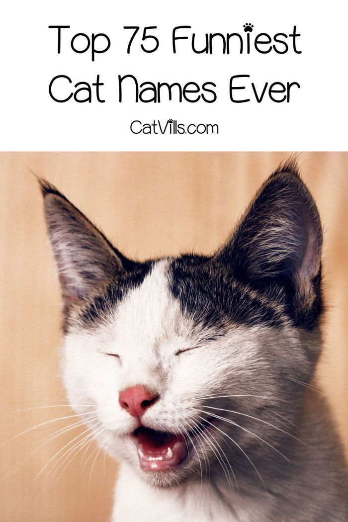 Top 75 Funniest Cat Names Ever Funny cat names, Cute cat