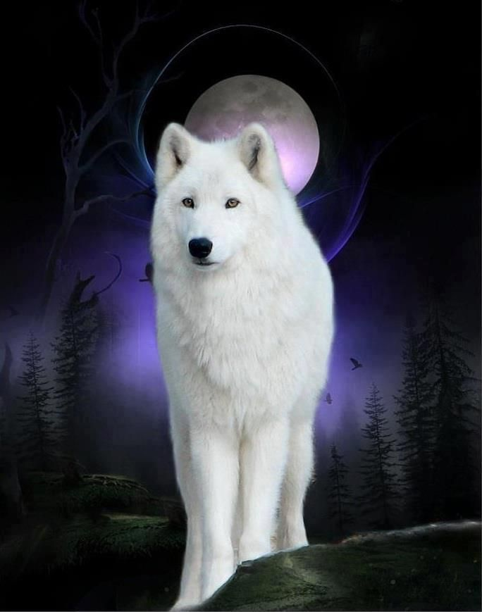 White Wolf In The Light Of The Silver Moon Anjing Serigala