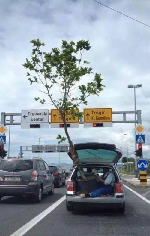 Riding in the back of a car with the back hatch open, holding a TREE, and approaching overhead signs.