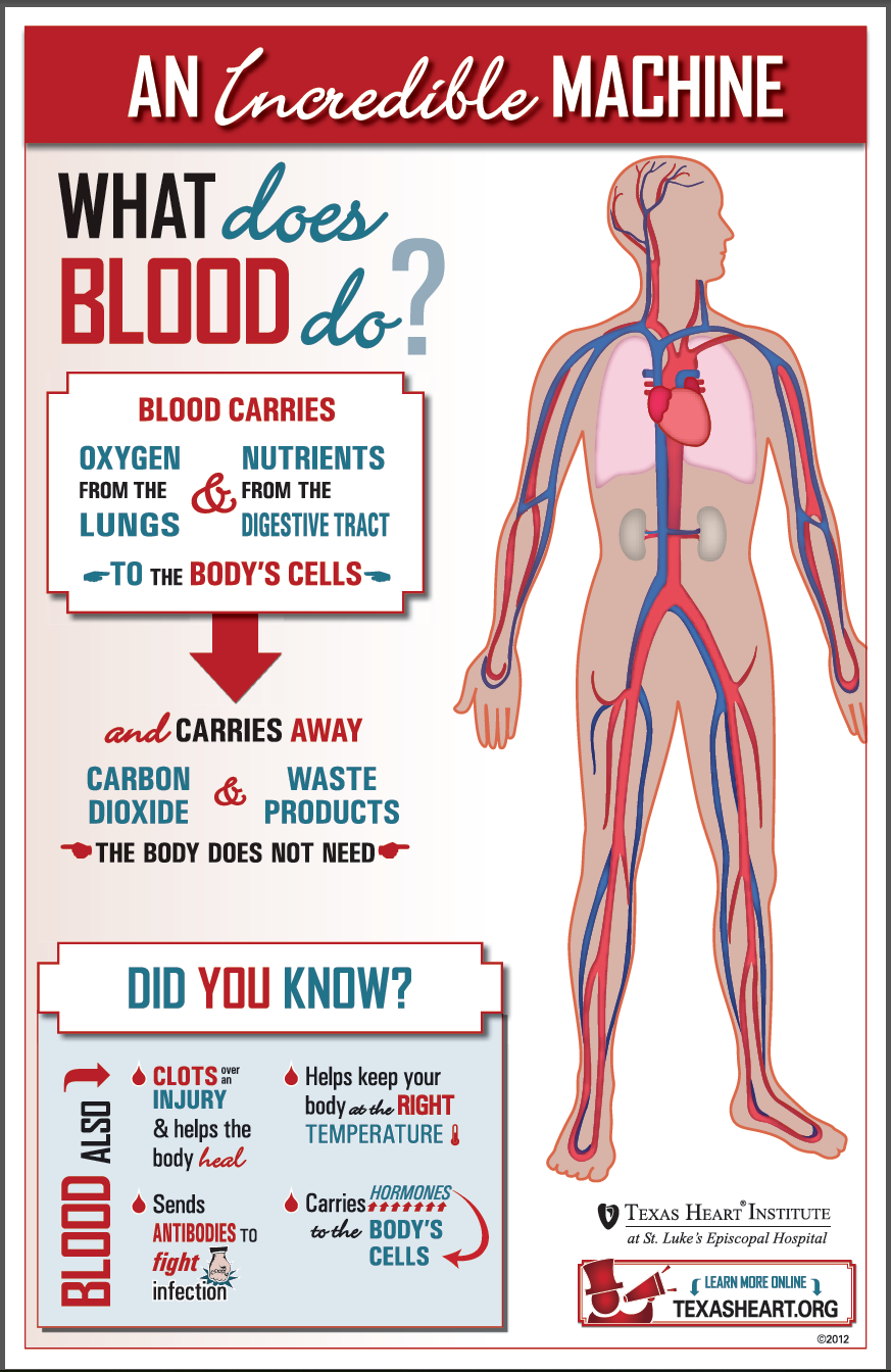 What does blood do? Fun facts about blood, an incredible machine in ...
